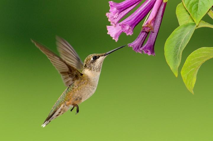 Comment attirer les colibris dans votre jardin